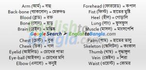 Commonly used wordsHuman Body